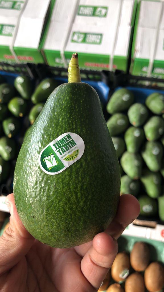 <span>Avokado</span> Üretim